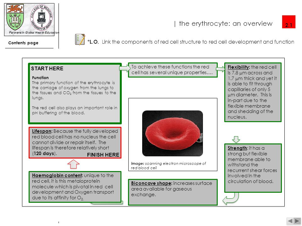 Partners in Global Health Education |blood film: a basic interpretation Contents 1.