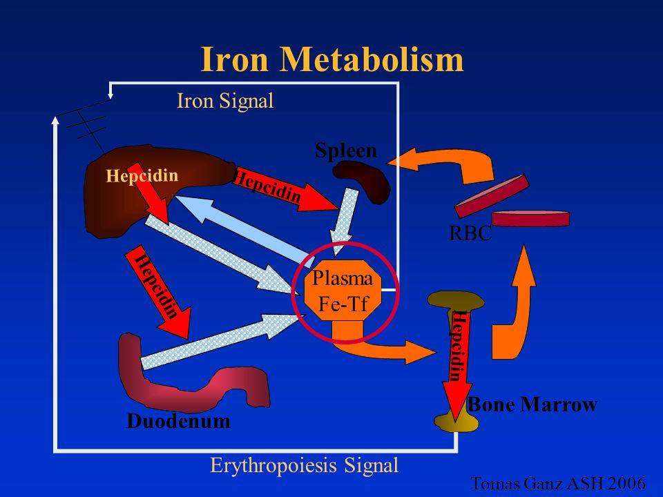 Iron Metabolism Plasma Fe-Tf Hepcidin Iron Signal Erythropoiesis Signal RBC Bone Marrow Duodenum Spleen Tomas Ganz ASH 2006 Hepcidin
