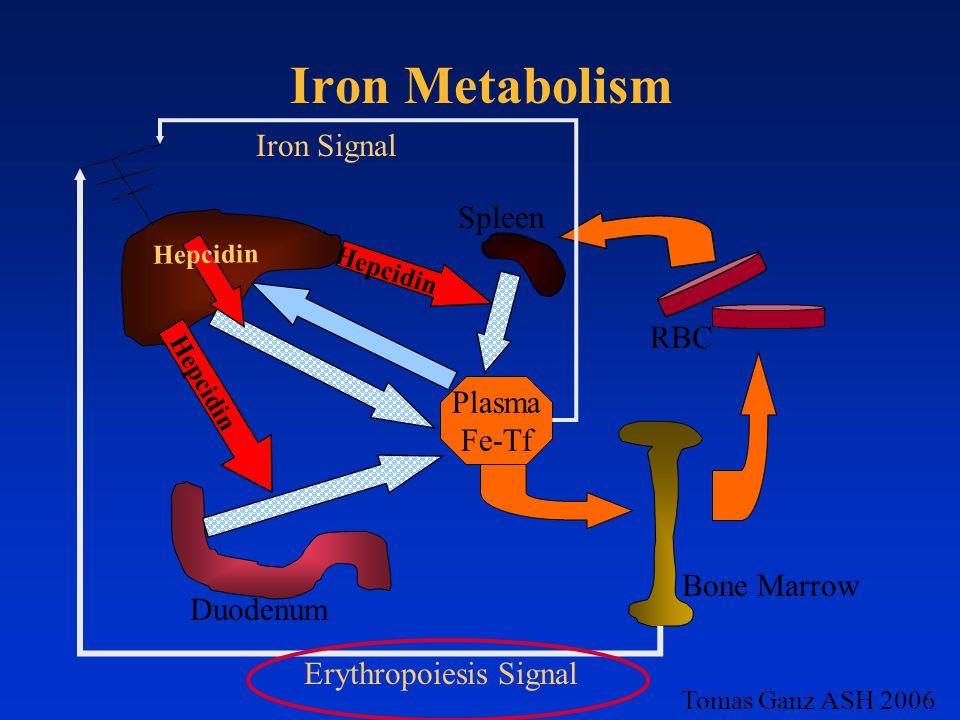 Iron Metabolism Plasma Fe-Tf Hepcidin Iron Signal Erythropoiesis Signal RBC Bone Marrow Duodenum Spleen Tomas Ganz ASH 2006