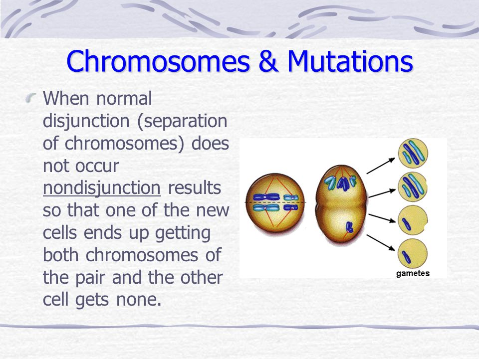 Chromosomes & Mutations When normal disjunction (separation of chromosomes) does not occur nondisjunction results so that one of the new cells ends up