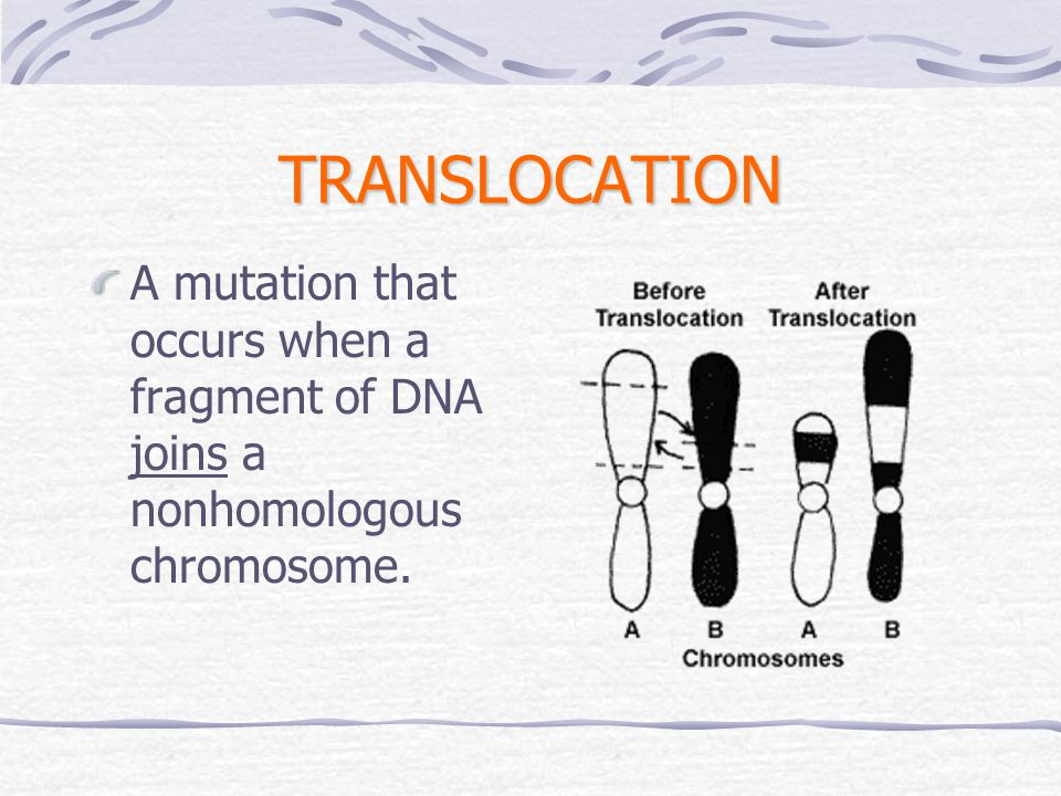 TRANSLOCATION A mutation that occurs when a fragment of DNA joins a nonhomologous chromosome.