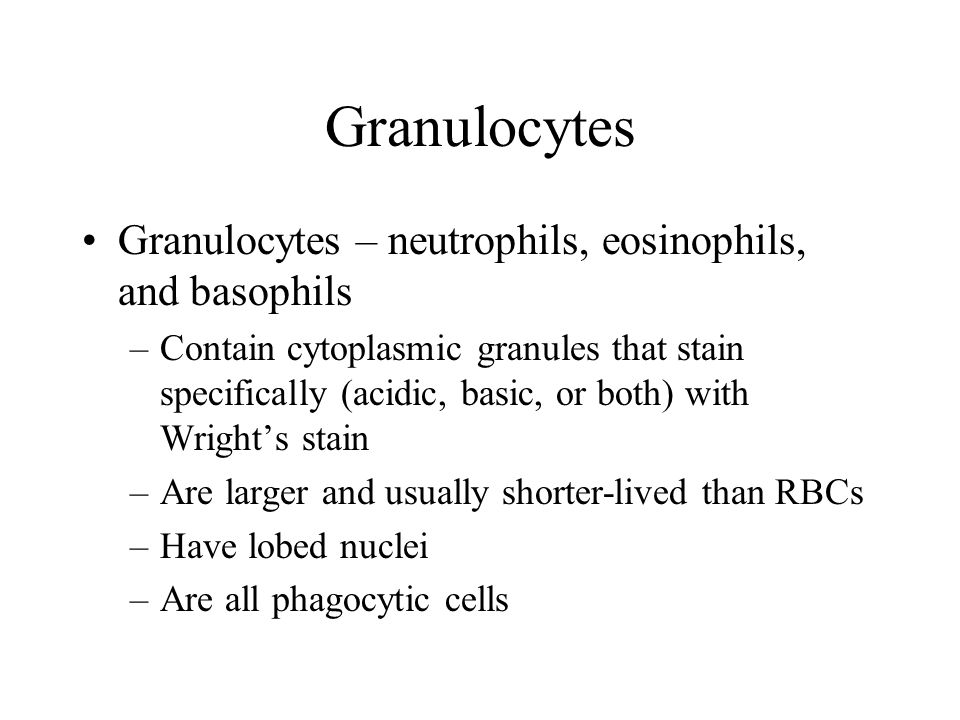 Granulocytes Granulocytes – neutrophils, eosinophils, and basophils –Contain cytoplasmic granules that stain specifically (acidic, basic, or both) wit