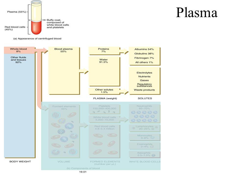 3 Classes of Plasma Proteins Albumins (60%) Globulins (35%) Fibrinogen (4%)
