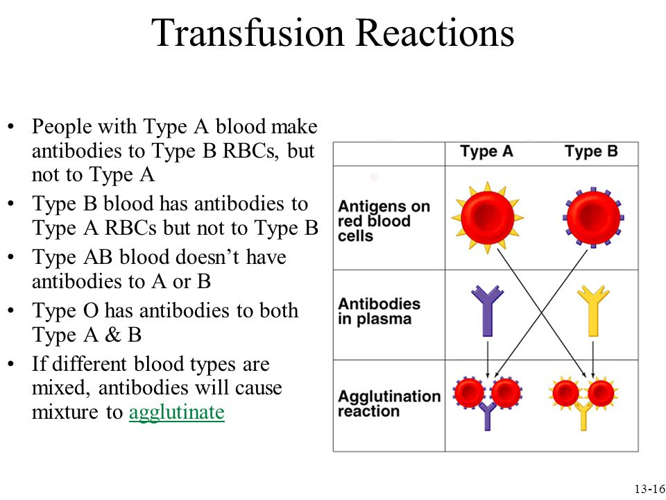 Transfusion Reactions People with Type A blood make antibodies to Type B RBCs, but not to Type A Type B blood has antibodies to Type A RBCs but not to Type B Type AB blood doesn't have antibodies to A or B Type O has antibodies to both Type A & B If different blood types are mixed, antibodies will cause mixture to agglutinate 13-16