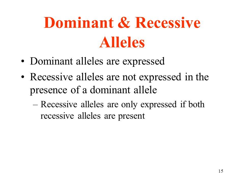 15 Dominant & Recessive Alleles Dominant alleles are expressed Recessive alleles are not expressed in the presence of a dominant allele –Recessive alleles are only expressed if both recessive alleles are present