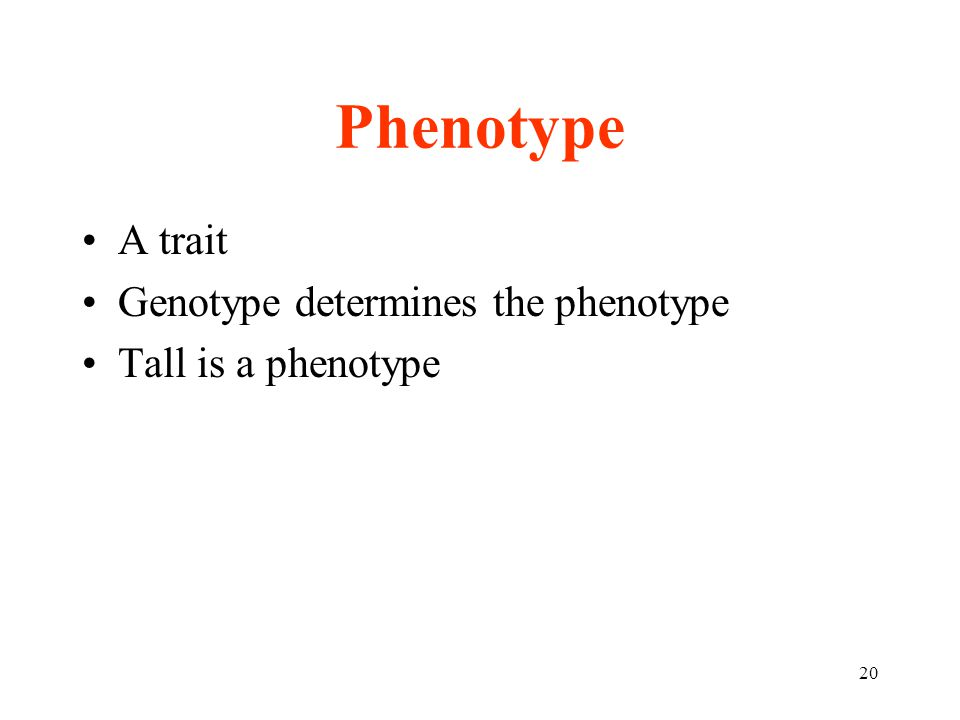 20 Phenotype A trait Genotype determines the phenotype Tall is a phenotype
