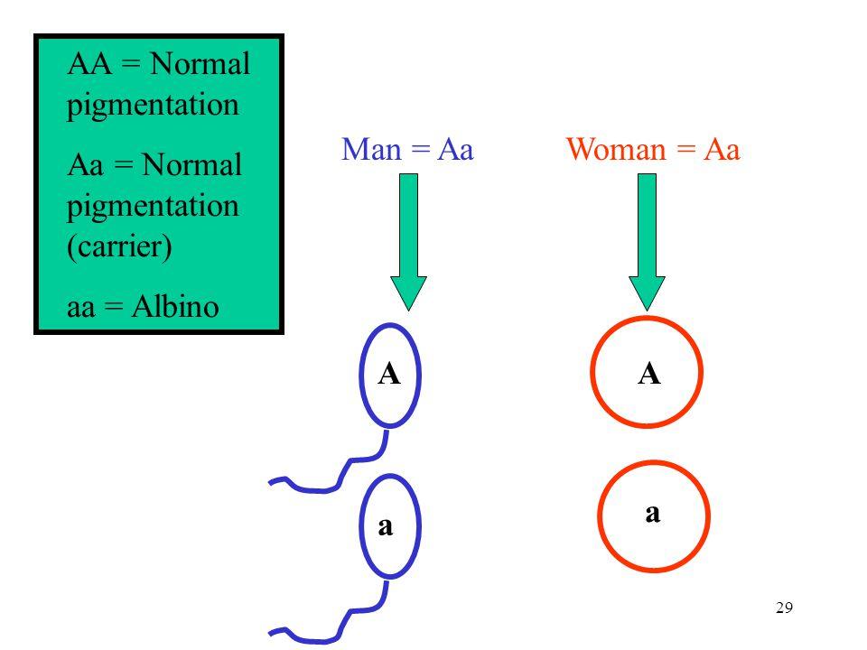 29 AA = Normal pigmentation Aa = Normal pigmentation (carrier) aa = Albino Man = AaWoman = Aa A a a A