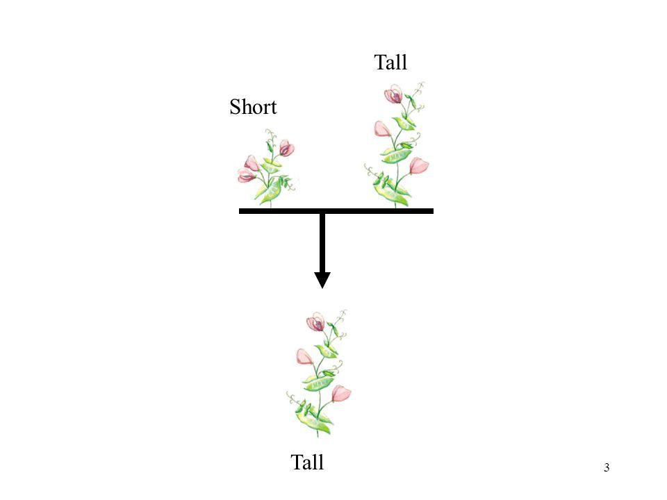 3 Short Tall