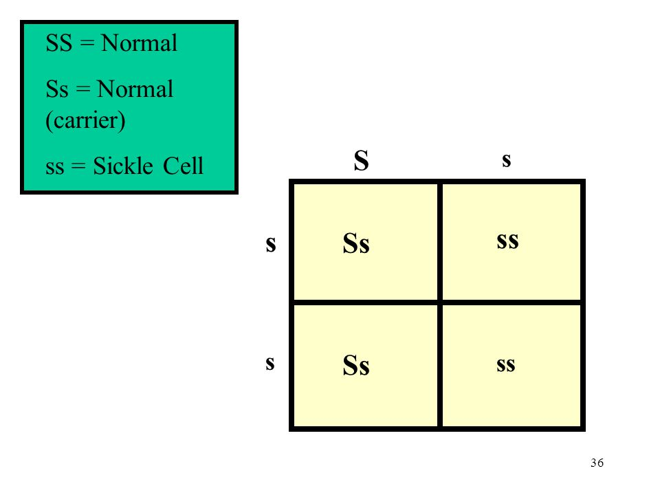 36 s s s Ss ss S SS = Normal Ss = Normal (carrier) ss = Sickle Cell