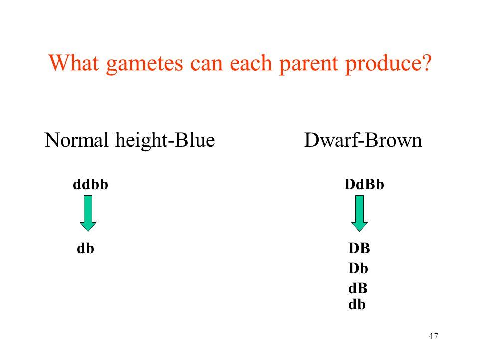 47 Normal height-Blue ddbb db What gametes can each parent produce? DdBb DB Db dB db Dwarf-Brown