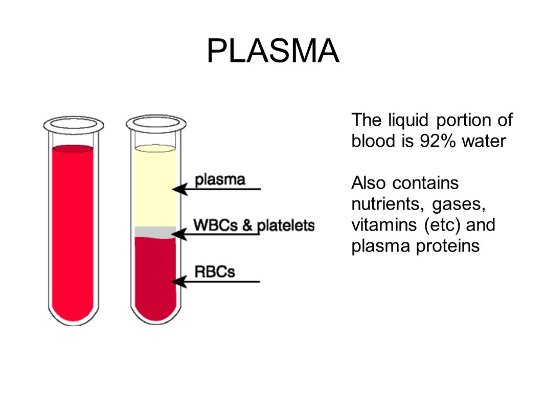 PLASMA The liquid portion of blood is 92% water Also contains nutrients, gases, vitamins (etc) and plasma proteins