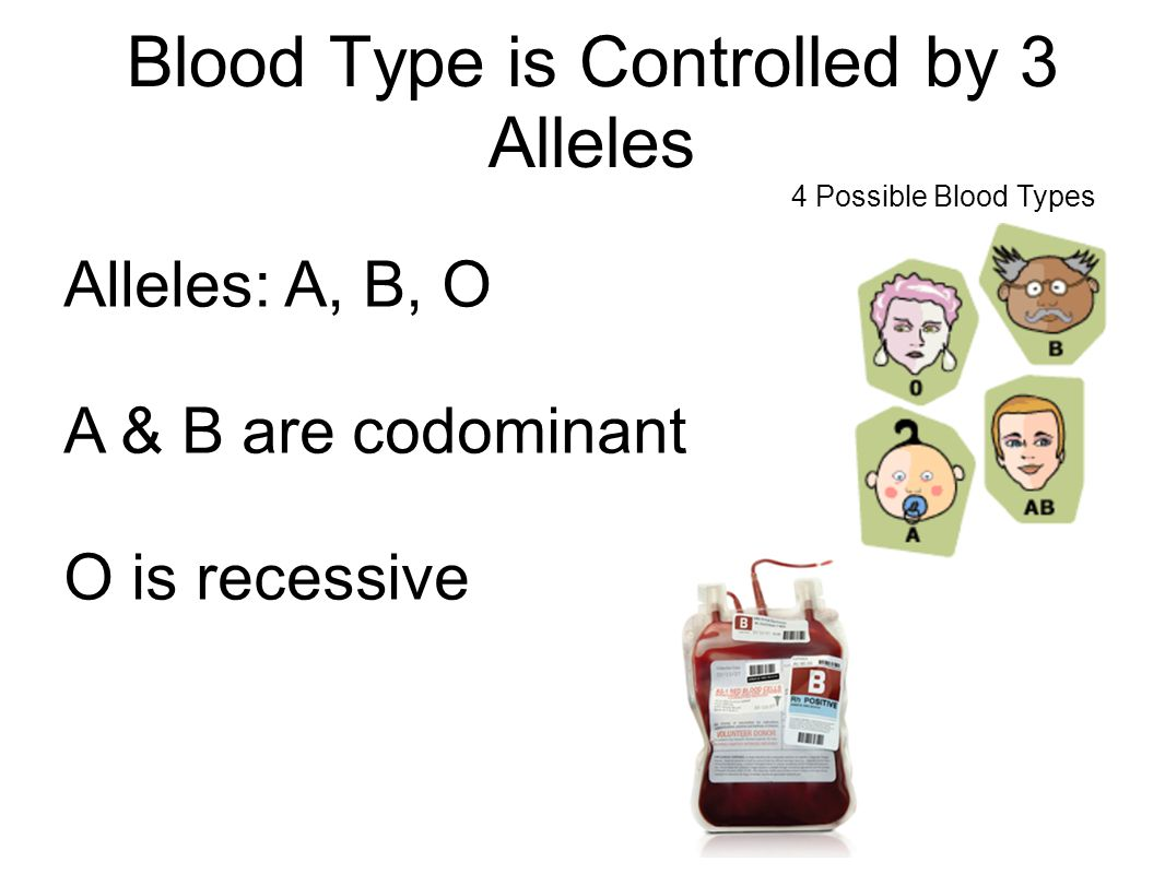 Blood Type is Controlled by 3 Alleles Alleles: A, B, O A & B are codominant O is recessive 4 Possible Blood Types