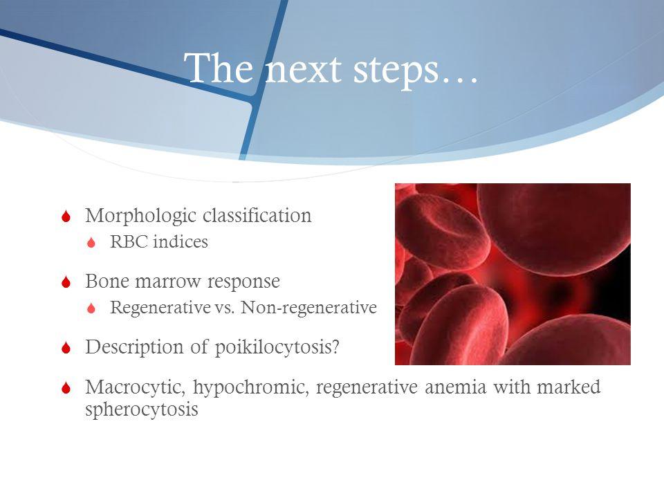 The next steps…  Morphologic classification  RBC indices  Bone marrow response  Regenerative vs. Non-regenerative  Description of poikilocytosis?