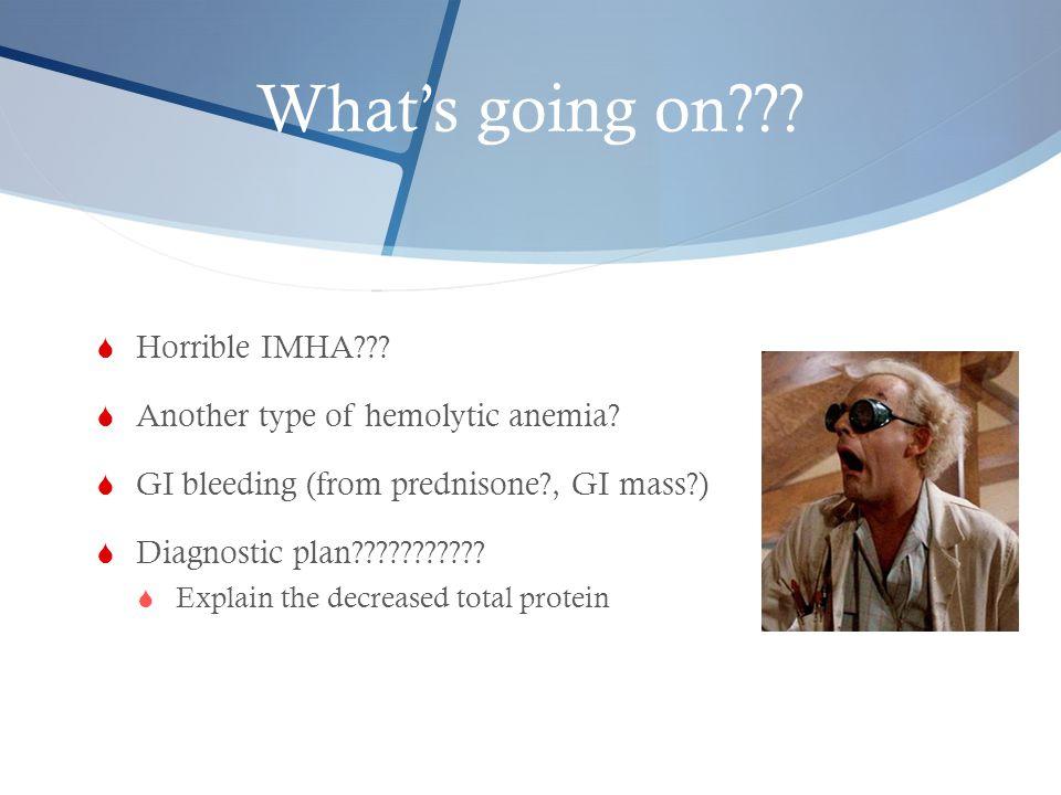 What's going on???  Horrible IMHA???  Another type of hemolytic anemia?  GI bleeding (from prednisone?, GI mass?)  Diagnostic plan???????????  Ex