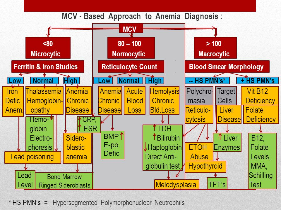 MCV - Based Approach to Anemia Diagnosis : MCV 100 Microcytic Normocytic Macrocytic Ferritin & Iron Studies Reticulocyte Count Blood Smear Morphology Low Normal High Low Normal High -- HS PMN's* + HS PMN's Iron Thalassemia Anemia Anemia Acute Hemolysis Polychro- Target Vit B12 Defic.