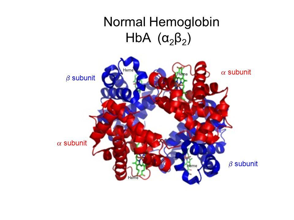 Heme Normal Hemoglobin HbA (α 2 β 2 )  subunit  subunit