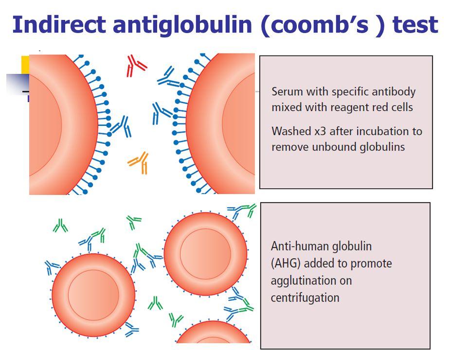 Indirect antiglobulin (coomb′s ) test