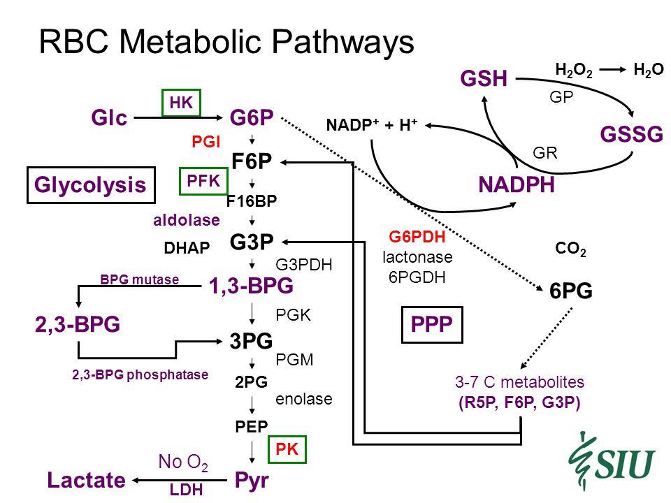 RBC Metabolic Pathways 2,3-BPG BPG mutase 2,3-BPG phosphatase PPP NADPH 6PG 3-7 C metabolites (R5P, F6P, G3P) G6PDH lactonase 6PGDH CO 2 NADP + + H + GSH GSSG GR GP H2O2H2O2 H2OH2O Glc Pyr G6P 1,3-BPG 3PG HK PGI PK F6P G3P PFK aldolase F16BP DHAP 2PG PEP PGK PGM enolase G3PDH Glycolysis Lactate No O 2 LDH