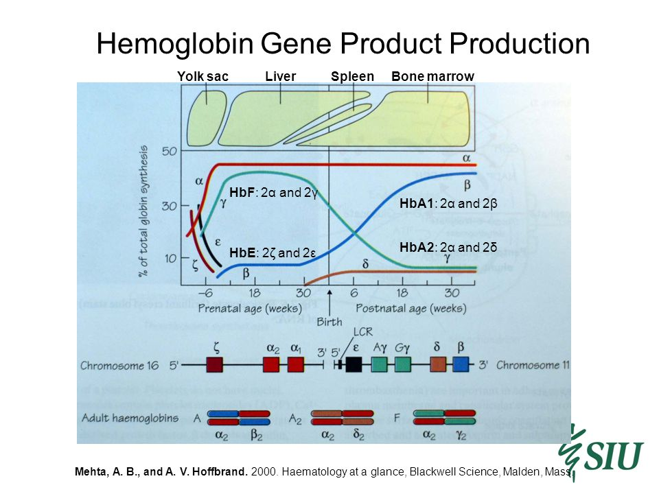 Hemoglobin Gene Product Production Mehta, A. B., and A. V. Hoffbrand. 2000. Haematology at a glance, Blackwell Science, Malden, Mass. HbF: 2α and 2γ H
