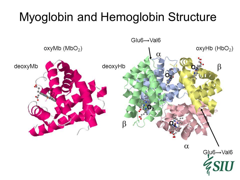 Myoglobin and Hemoglobin Structure deoxyHb deoxyMb     oxyHb (HbO 2 ) O2O2 O2O2 O2O2 O2O2 Glu6→Val6 oxyMb (MbO 2 ) O2O2