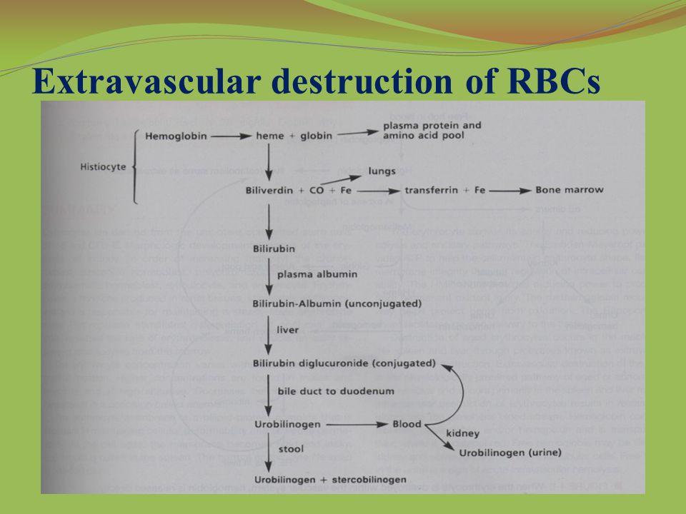 Extravascular destruction of RBCs