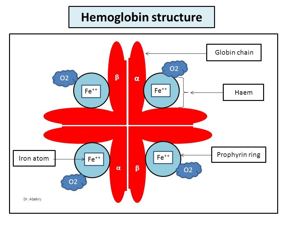 α β β α Fe⁺⁺ Globin chain Haem Prophyrin ring Iron atom O2 Hemoglobin structure Dr. Aljabry