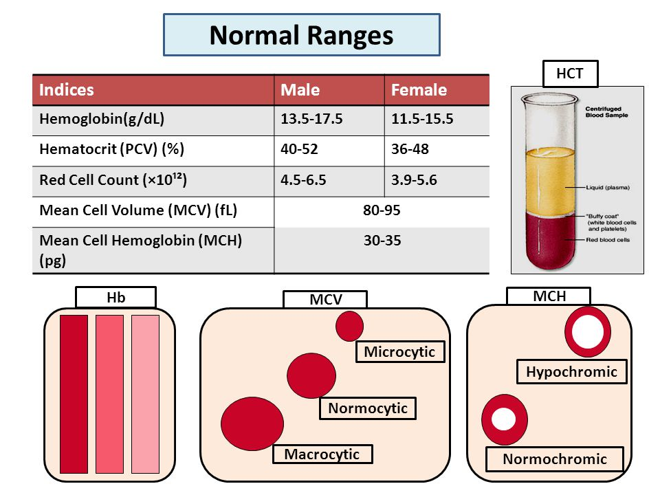 FemaleMaleIndices 11.5-15.513.5-17.5Hemoglobin(g/dL) 36-4840-52Hematocrit (PCV) (%) 3.9-5.64.5-6.5Red Cell Count (×10¹²) 80-95Mean Cell Volume (MCV) (fL) 30-35Mean Cell Hemoglobin (MCH) (pg) Hb Macrocytic Normocytic Microcytic MCV Normochromic Hypochromic MCH Normal Ranges HCT