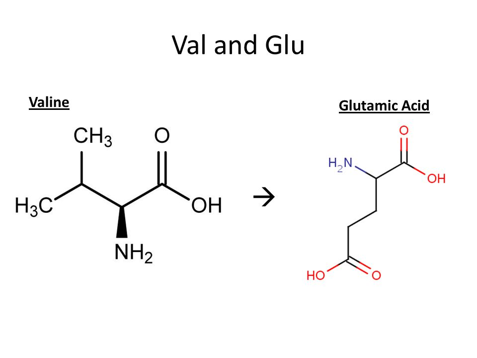 Val and Glu Valine Glutamic Acid 