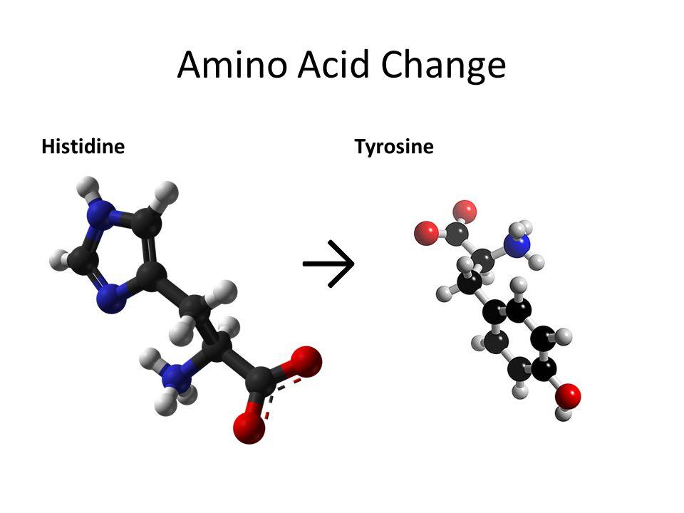 Amino Acid Change HistidineTyrosine →