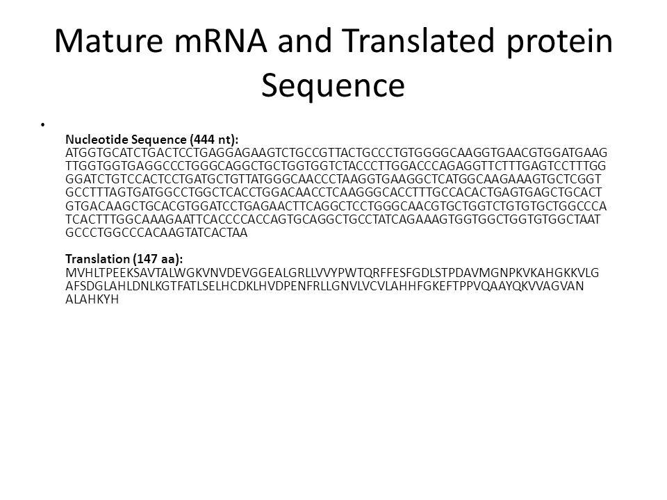 Mature mRNA and Translated protein Sequence Nucleotide Sequence (444 nt): ATGGTGCATCTGACTCCTGAGGAGAAGTCTGCCGTTACTGCCCTGTGGGGCAAGGTGAACGTGGATGAAG TTGGTGGTGAGGCCCTGGGCAGGCTGCTGGTGGTCTACCCTTGGACCCAGAGGTTCTTTGAGTCCTTTGG GGATCTGTCCACTCCTGATGCTGTTATGGGCAACCCTAAGGTGAAGGCTCATGGCAAGAAAGTGCTCGGT GCCTTTAGTGATGGCCTGGCTCACCTGGACAACCTCAAGGGCACCTTTGCCACACTGAGTGAGCTGCACT GTGACAAGCTGCACGTGGATCCTGAGAACTTCAGGCTCCTGGGCAACGTGCTGGTCTGTGTGCTGGCCCA TCACTTTGGCAAAGAATTCACCCCACCAGTGCAGGCTGCCTATCAGAAAGTGGTGGCTGGTGTGGCTAAT GCCCTGGCCCACAAGTATCACTAA Translation (147 aa): MVHLTPEEKSAVTALWGKVNVDEVGGEALGRLLVVYPWTQRFFESFGDLSTPDAVMGNPKVKAHGKKVLG AFSDGLAHLDNLKGTFATLSELHCDKLHVDPENFRLLGNVLVCVLAHHFGKEFTPPVQAAYQKVVAGVAN ALAHKYH