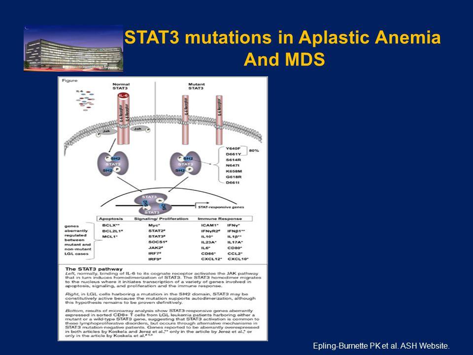 STAT3 mutations in Aplastic Anemia And MDS. Epling-Burnette PK et al. ASH Website.