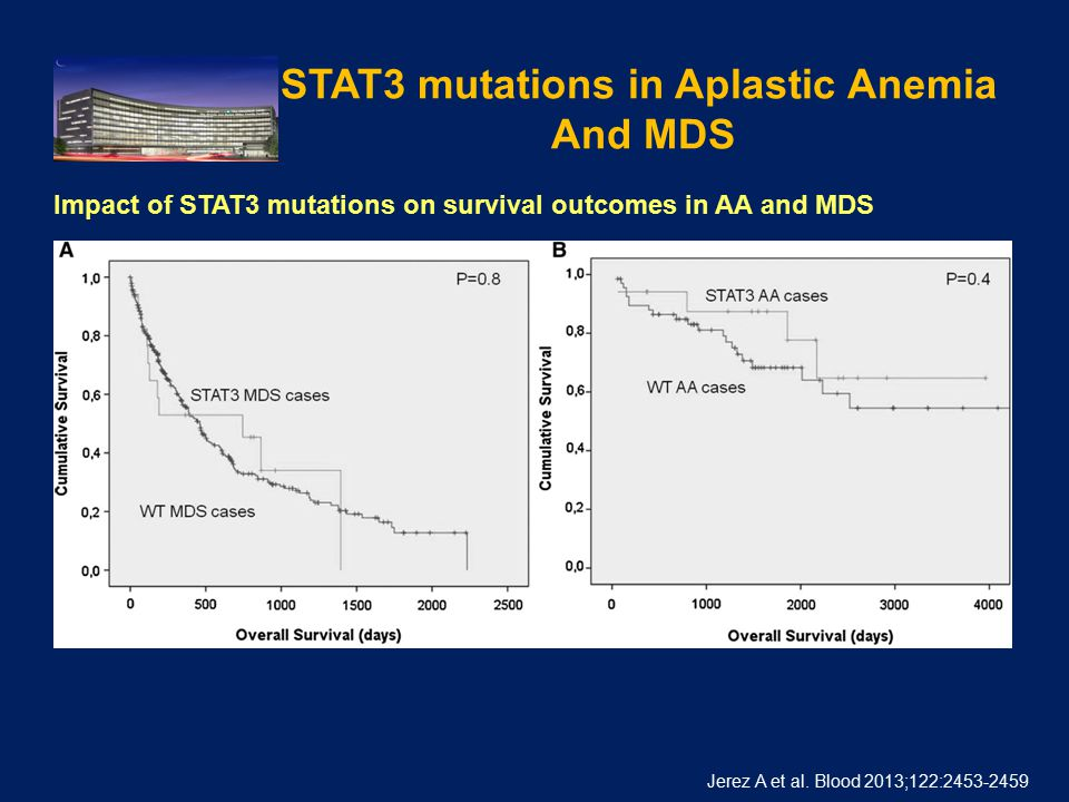 STAT3 mutations in Aplastic Anemia And MDS. Jerez A et al.