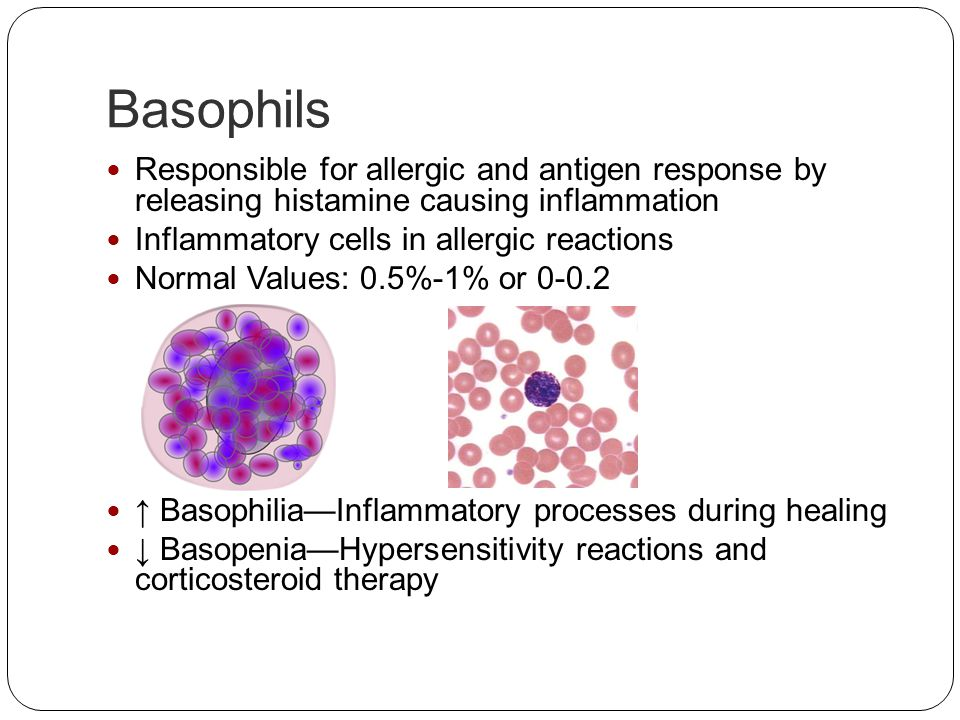 Basophils Responsible for allergic and antigen response by releasing histamine causing inflammation Inflammatory cells in allergic reactions Normal Va