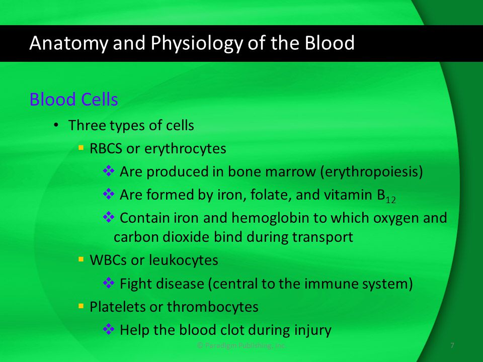 Anatomy and Physiology of the Blood Blood Cells Three types of cells  RBCS or erythrocytes  Are produced in bone marrow (erythropoiesis)  Are formed by iron, folate, and vitamin B 12  Contain iron and hemoglobin to which oxygen and carbon dioxide bind during transport  WBCs or leukocytes  Fight disease (central to the immune system)  Platelets or thrombocytes  Help the blood clot during injury © Paradigm Publishing, Inc.7