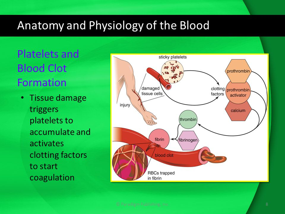 Anatomy and Physiology of the Blood © Paradigm Publishing, Inc.8 Platelets and Blood Clot Formation Tissue damage triggers platelets to accumulate and activates clotting factors to start coagulation