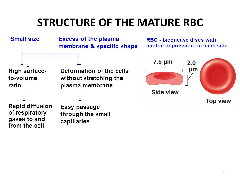 Figure 16-5 Red Blood Cells