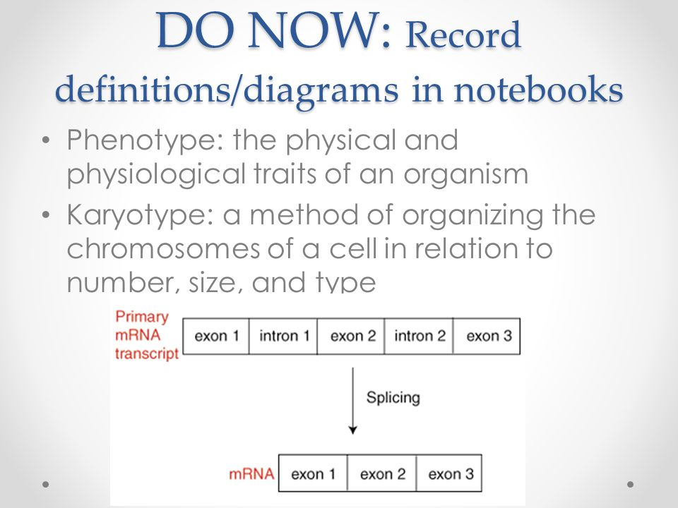 DO NOW: Record definitions/diagrams in notebooks Phenotype: the physical and physiological traits of an organism Karyotype: a method of organizing the chromosomes of a cell in relation to number, size, and type