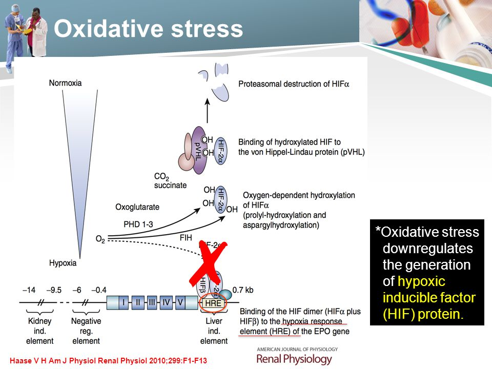 Oxidative stress Haase V H Am J Physiol Renal Physiol 2010;299:F1-F13 ✗ * Oxidative stress downregulates the generation of hypoxic inducible factor (H