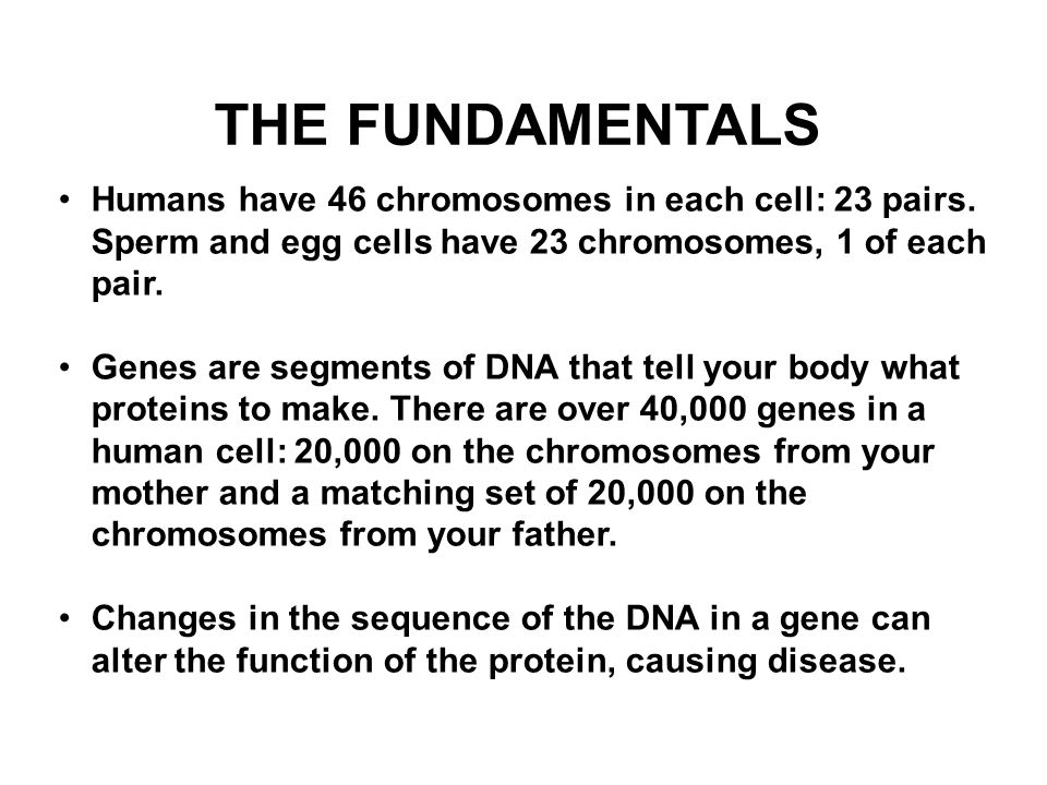 THE FUNDAMENTALS Humans have 46 chromosomes in each cell: 23 pairs. Sperm and egg cells have 23 chromosomes, 1 of each pair. Genes are segments of DNA