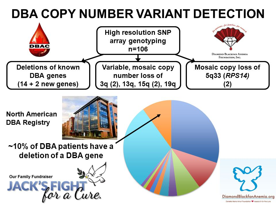 High resolution SNP array genotyping n=106 Deletions of known DBA genes (14 + 2 new genes) Variable, mosaic copy number loss of 3q (2), 13q, 15q (2),