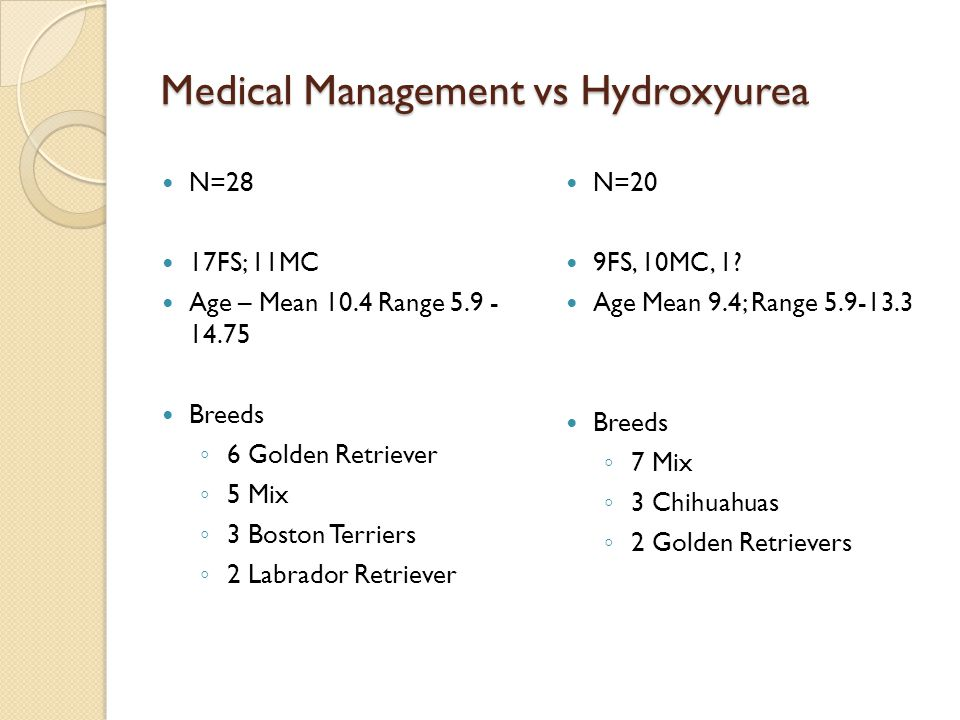 Medical Management vs Hydroxyurea N=28 17FS; 11MC Age – Mean 10.4 Range 5.9 - 14.75 Breeds ◦ 6 Golden Retriever ◦ 5 Mix ◦ 3 Boston Terriers ◦ 2 Labrador Retriever N=20 9FS, 10MC, 1.
