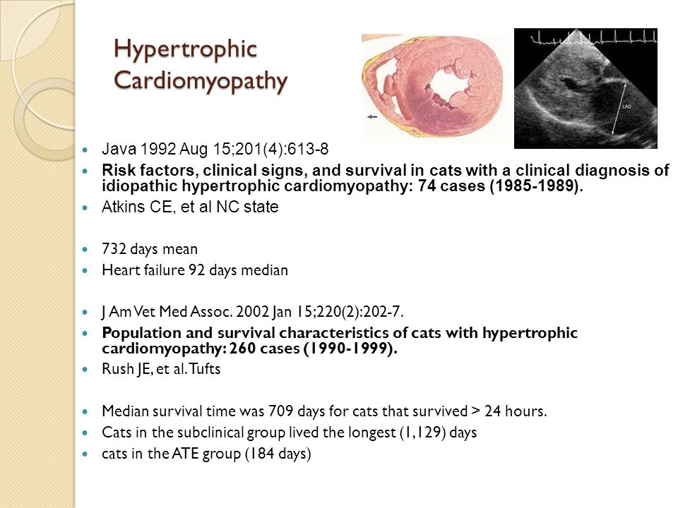 Hypertrophic Cardiomyopathy Java 1992 Aug 15;201(4):613-8 Risk factors, clinical signs, and survival in cats with a clinical diagnosis of idiopathic h