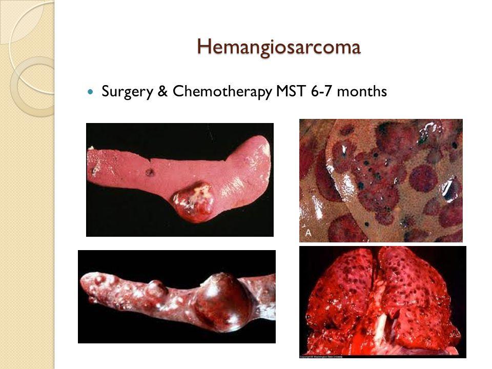 Hemangiosarcoma Surgery & Chemotherapy MST 6-7 months