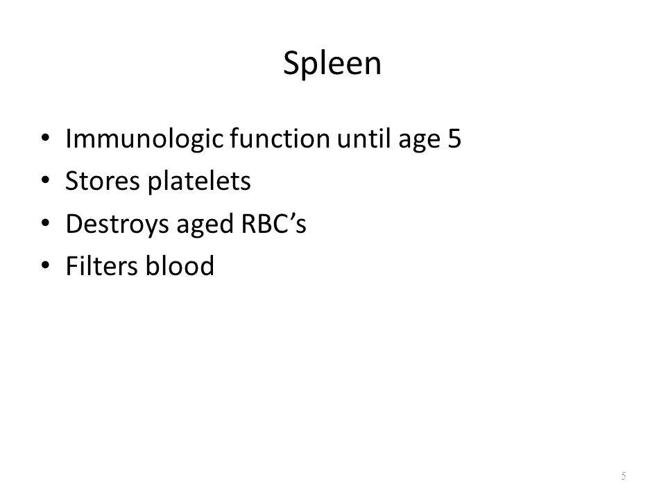 Spleen Immunologic function until age 5 Stores platelets Destroys aged RBC's Filters blood 5