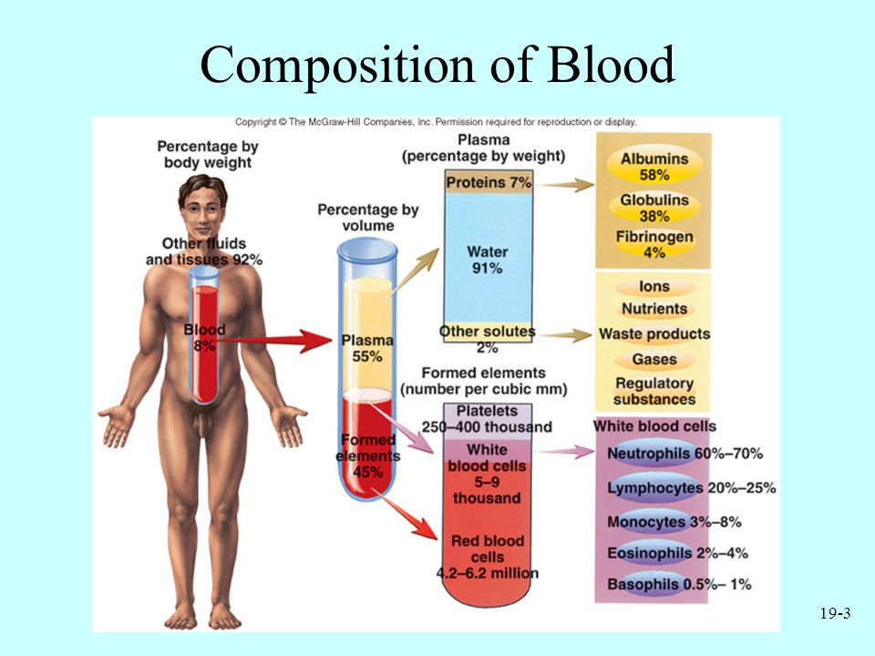 19-14 Thrombocytes Cell fragments pinched off from megakaryocytes in red bone marrow Important in preventing blood loss –Platelet plugs –Promoting formation and contraction of clots