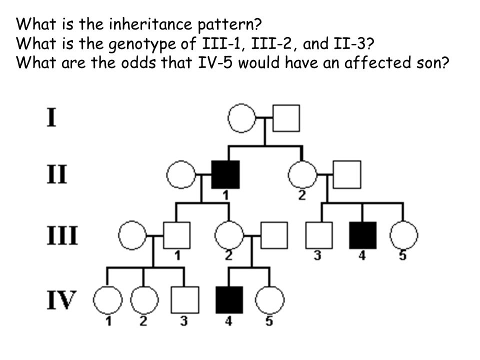 What is the inheritance pattern. What is the genotype of III-1, III-2, and II-3.