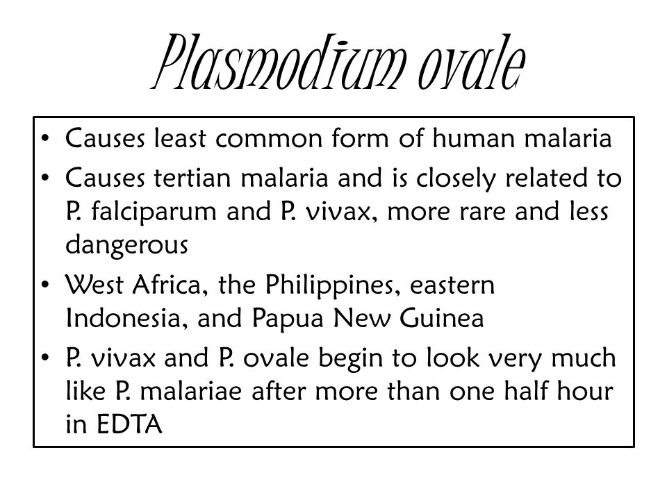 Plasmodium ovale Causes least common form of human malaria Causes tertian malaria and is closely related to P.