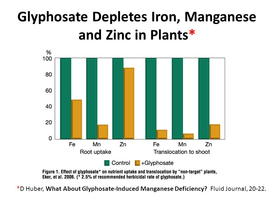 Glyphosate Depletes Iron, Manganese and Zinc in Plants* *D Huber, What About Glyphosate-Induced Manganese Deficiency.