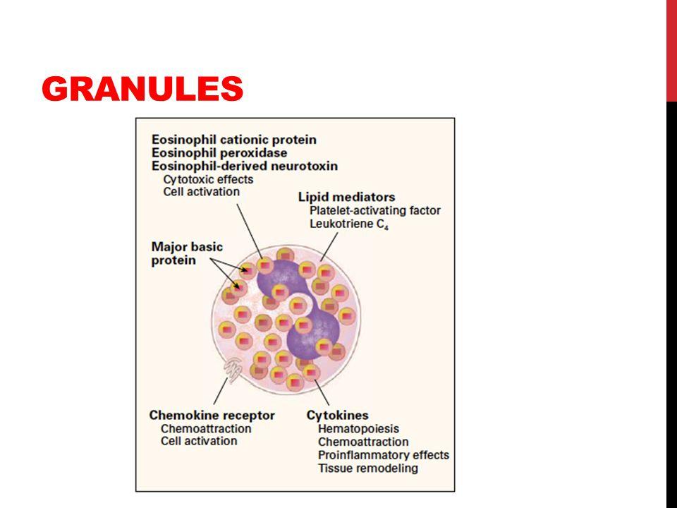 APPROACH TO DRUG THERAPY Glucocorticoids Interferon alpha Cyclophilins Leukotriene antagonists IL12 IL5 or chemokine receptor ab Lidocaine