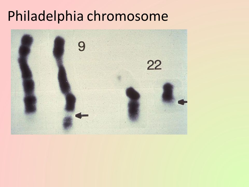 Chromosomal abnormalities Incorrect number of chromosomes – nondisjunction chromosomes don't separate properly during meiosis – breakage of chromosomes deletion duplication inversion translocation